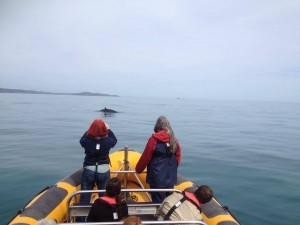 Passengers whale watching on the Wild Atlantic Way