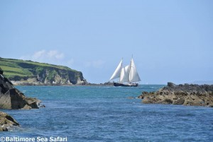 Tall ship Tom of Antwerp off Cape Clear island in West Cork, Ireland