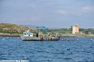 Tending mussel lines near Jeremy Irons Castle in Roaringwater Bay, west Cork