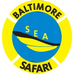 Baltimore Sea Safari