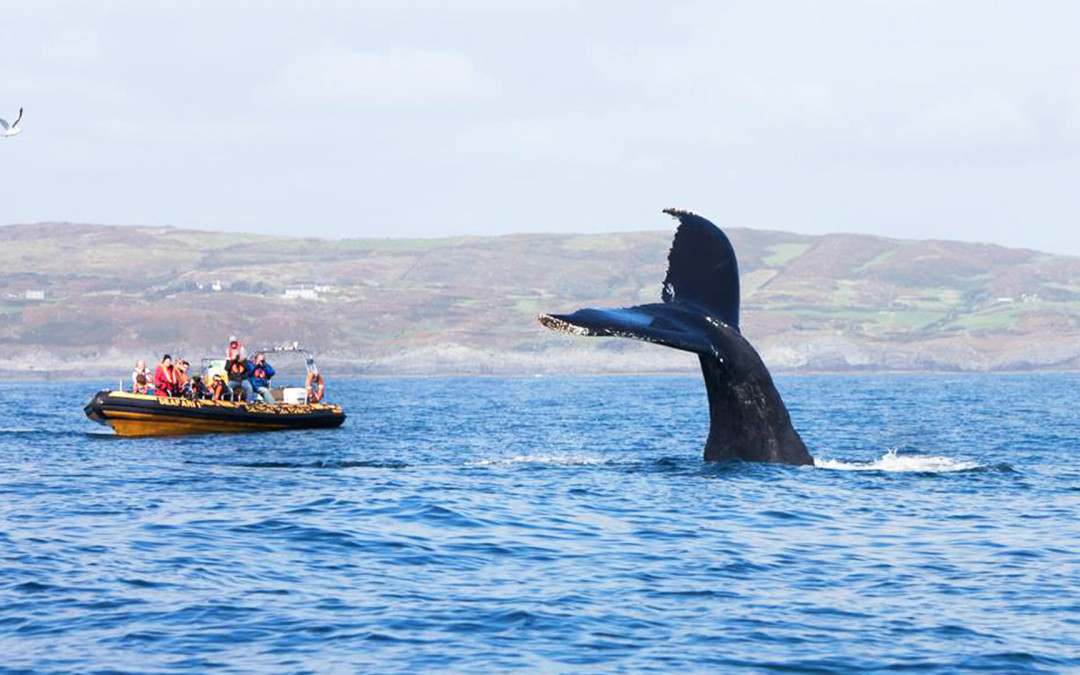 Image result for whale watching west cork