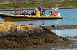 Seal watching in West Cork with Baltimore Sea Safari