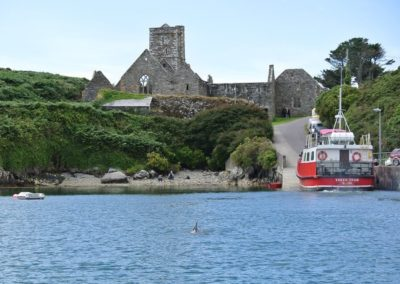 Dolphin watching in Sherkin Island