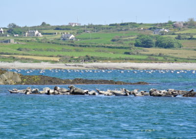 A Roaringwater Bay seal colony