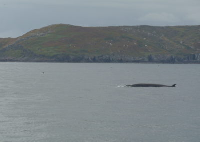 Minke whale watching