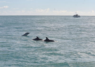 Dolphin watching with Baltimore Sea Safari