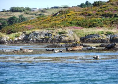 Common Seals in West Cork