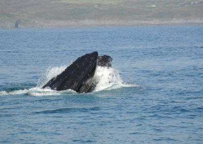Humpback whale watching