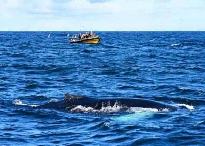 Whale Watching in West Cork - Baltimore Sea Safari