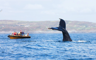 Whale Watching – Humpback Whale Watching boat trip in West Cork, Ireland