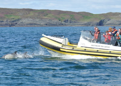 West Cork dolphin watching boat trip