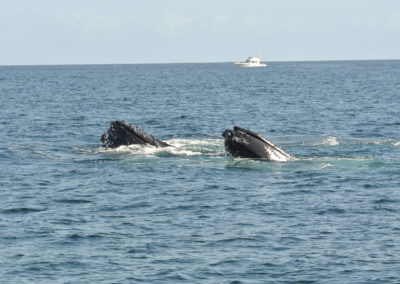 Synchronized whales