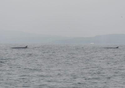 Finnwale reisen von Baltimore