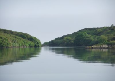 Tranquil West Cork - Baltimore Sea Safari