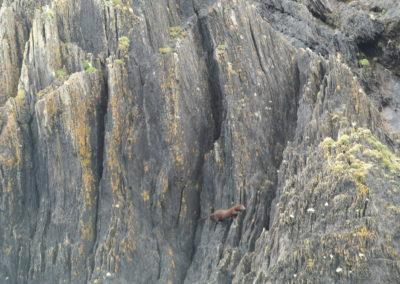 A minke climbing shoreline in West Cork