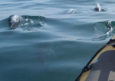 dauphins et bateau Baltimore Sea Safrai